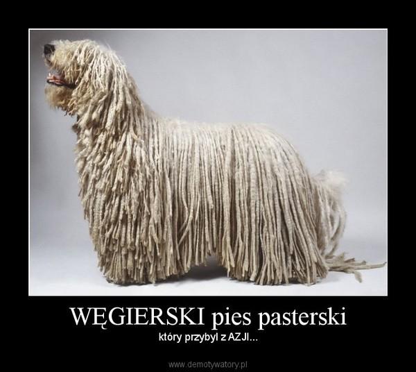 WĘGIERSKI pies pasterski – który przybyl z AZJI...