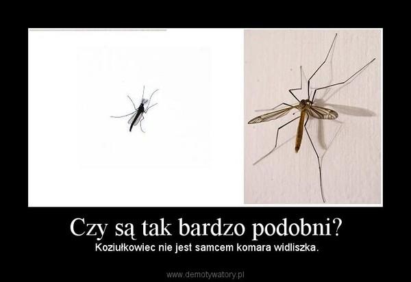 Czy są tak bardzo podobni? –  Koziułkowiec nie jest samcem komara widliszka.