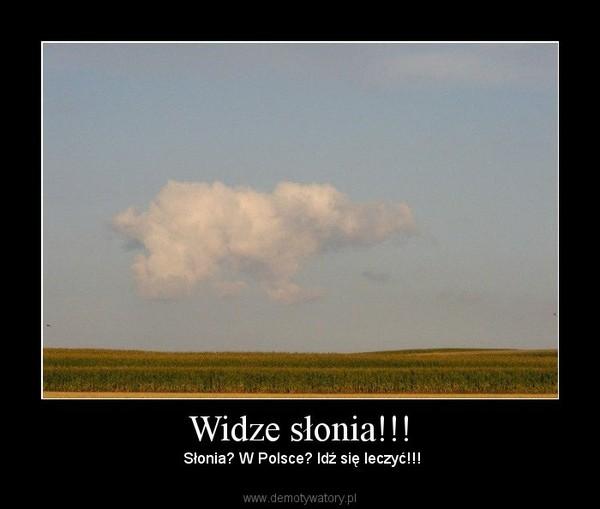 Widze słonia!!! –  Słonia? W Polsce? Idź się leczyć!!!