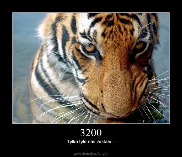 3200 –  Tylko tyle nas zostało...
