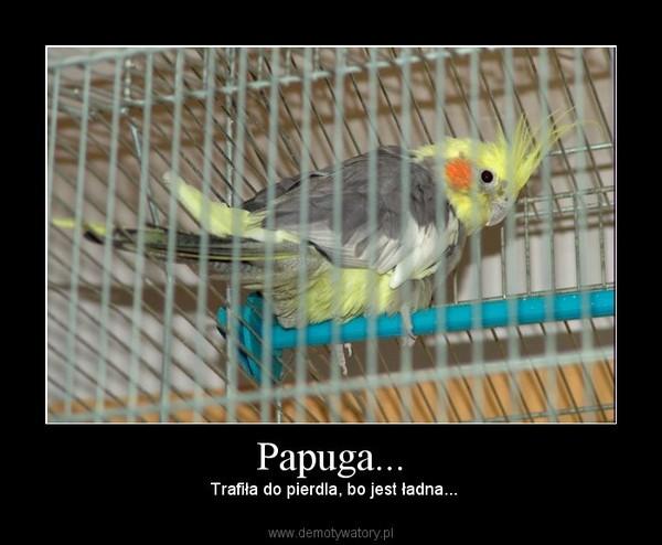Papuga... – Trafiła do pierdla, bo jest ładna...