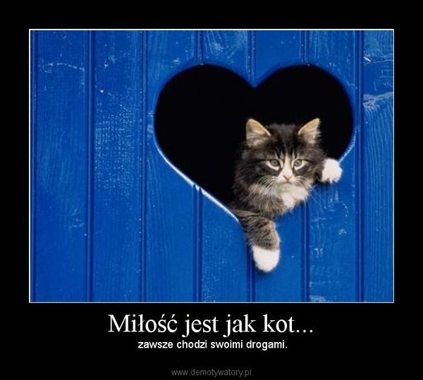 Miłość jest jak kot... – zawsze chodzi swoimi drogami.