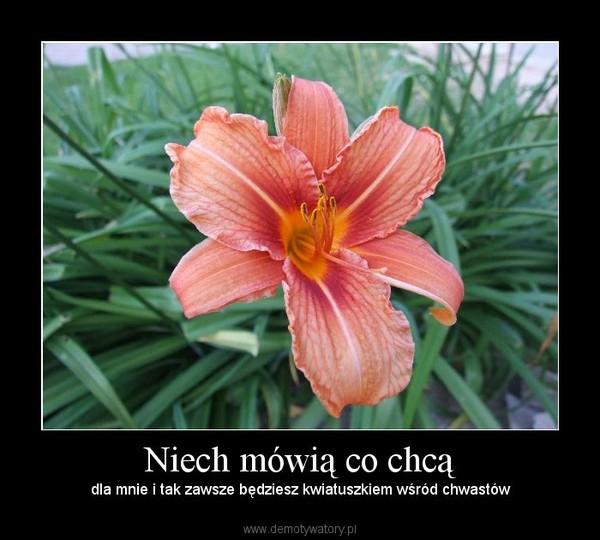 Niech mówią co chcą – dla mnie i tak zawsze będziesz kwiatuszkiem wśród chwastów