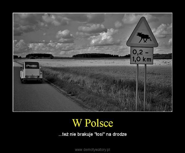 """W Polsce – ...też nie brakuje """"łosi"""" na drodze"""