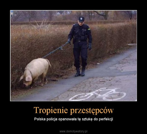 Tropienie przestępców – Polska policja opanowała tę sztukę do perfekcji
