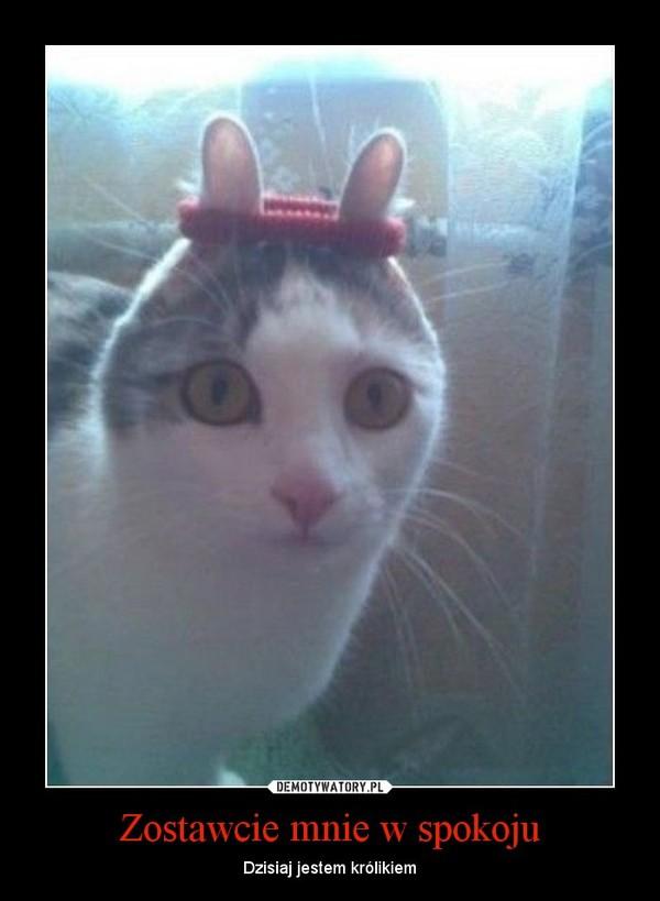 Zostawcie mnie w spokoju – Dzisiaj jestem królikiem
