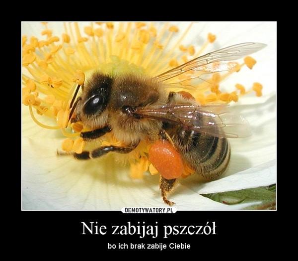 Nie zabijaj pszczół – bo ich brak zabije Ciebie