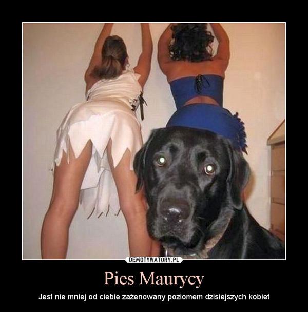 Pies Maurycy – Jest nie mniej od ciebie zażenowany poziomem dzisiejszych kobiet