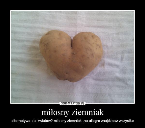 miłosny ziemniak – alternatywa dla kwiatów? milosny ziemniak ,na allegro znajdziesz wszystko