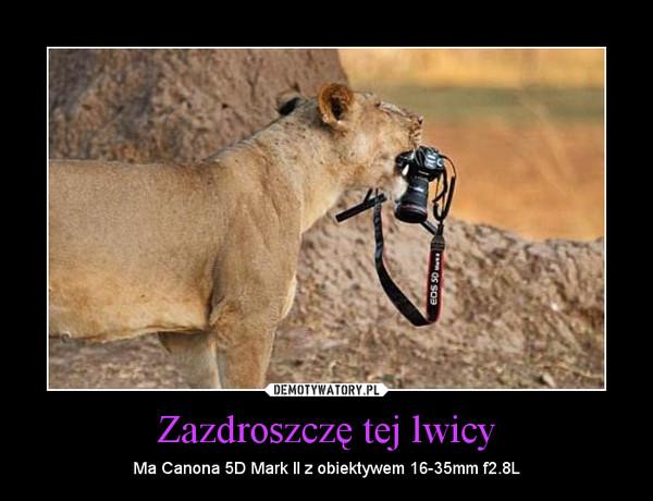 Zazdroszczę tej lwicy – Ma Canona 5D Mark II z obiektywem 16-35mm f2.8L