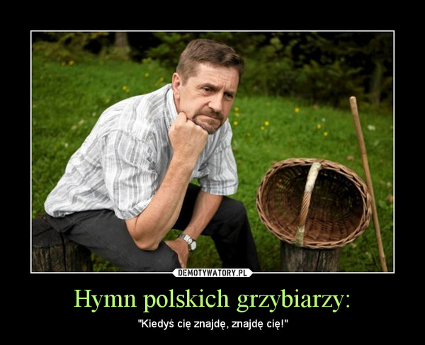 """Hymn polskich grzybiarzy: – """"Kiedyś cię znajdę, znajdę cię!"""""""