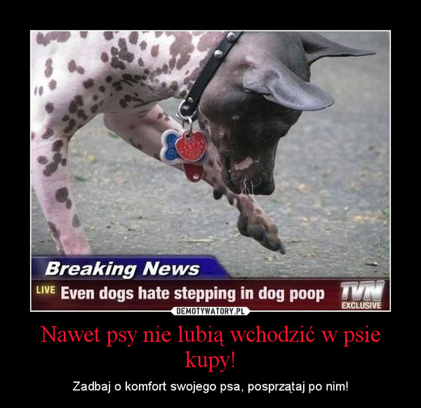 Nawet psy nie lubią wchodzić w psie kupy! – Zadbaj o komfort swojego psa, posprzątaj po nim!