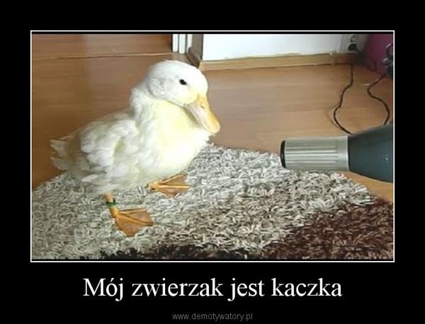 Mój zwierzak jest kaczka –