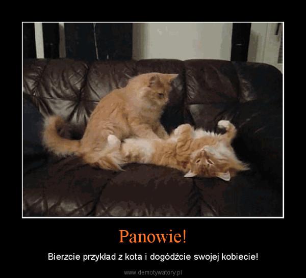 Panowie! – Bierzcie przykład z kota i dogódźcie swojej kobiecie!