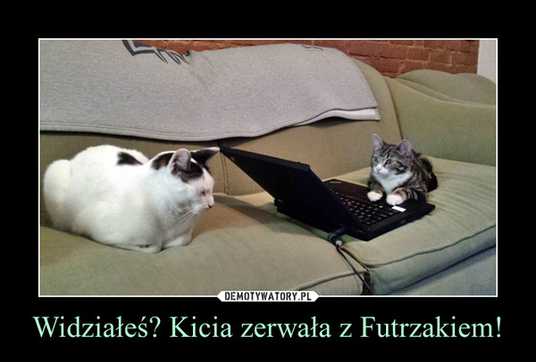 Widziałeś? Kicia zerwała z Futrzakiem! –