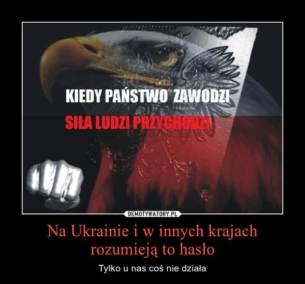Na Ukrainie i w innych krajach rozumieją to hasło – Tylko u nas coś nie działa