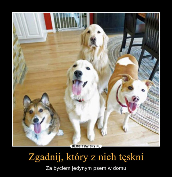 Zgadnij, który z nich tęskni – Za byciem jedynym psem w domu