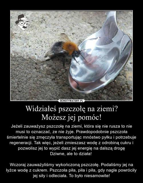 Widziałeś pszczołę na ziemi? Możesz jej pomóc!