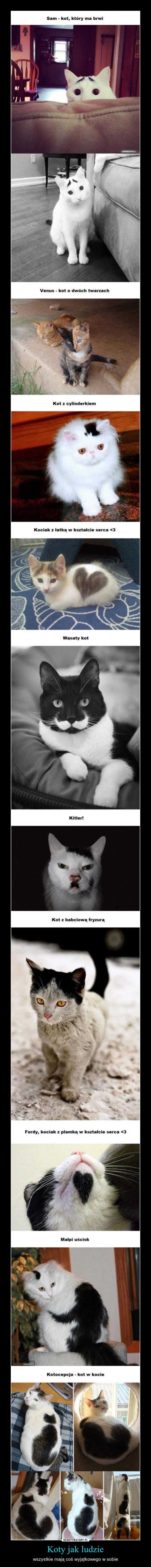 Koty jak ludzie – wszystkie mają coś wyjątkowego w sobie