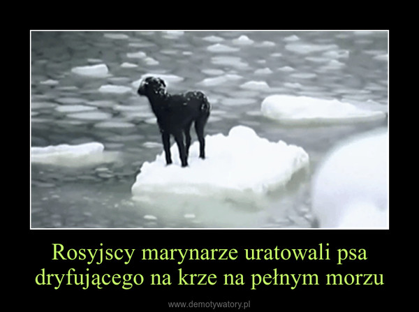 Rosyjscy marynarze uratowali psa dryfującego na krze na pełnym morzu –