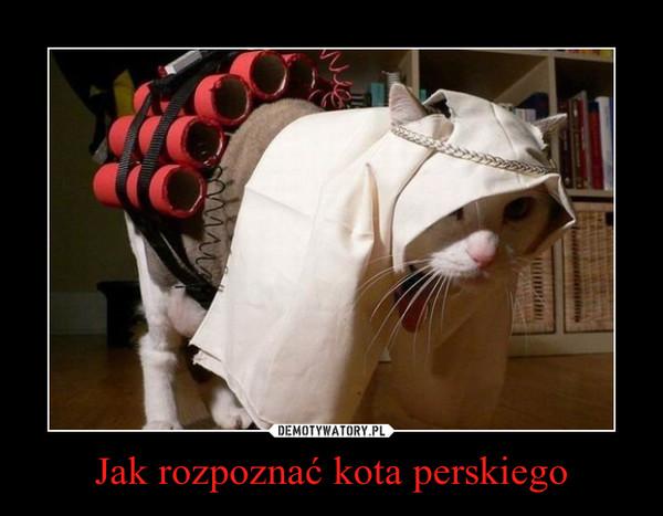Jak rozpoznać kota perskiego –