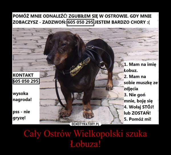 Cały Ostrów Wielkopolski szuka Łobuza! –