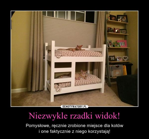 Niezwykle rzadki widok! – Pomysłowe, ręcznie zrobione miejsce dla kotówi one faktycznie z niego korzystają!