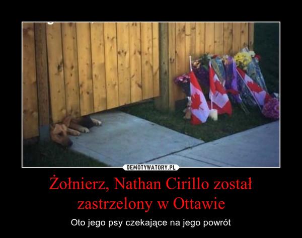 Żołnierz, Nathan Cirillo został zastrzelony w Ottawie – Oto jego psy czekające na jego powrót
