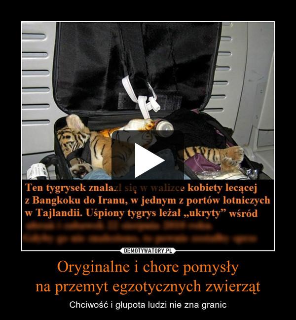 Oryginalne i chore pomysłyna przemyt egzotycznych zwierząt – Chciwość i głupota ludzi nie zna granic