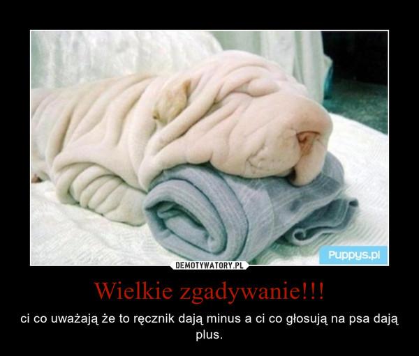 Wielkie zgadywanie!!! – ci co uważają że to ręcznik dają minus a ci co głosują na psa dają plus.