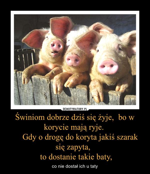 Świniom dobrze dziś się żyje,  bo w korycie mają ryje.      Gdy o drogę do koryta jakiś szarak się zapyta,   to dostanie takie baty, – co nie dostał ich u taty