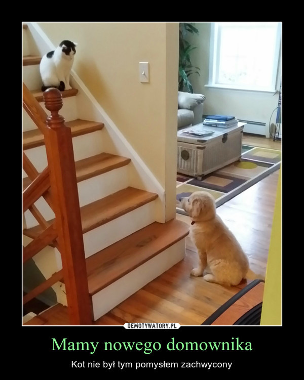 Mamy nowego domownika – Kot nie był tym pomysłem zachwycony