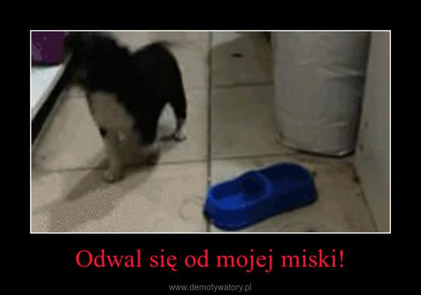 Odwal się od mojej miski! –