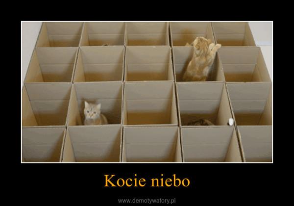 Kocie niebo –