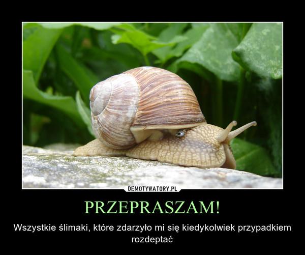 PRZEPRASZAM! – Wszystkie ślimaki, które zdarzyło mi się kiedykolwiek przypadkiem rozdeptać