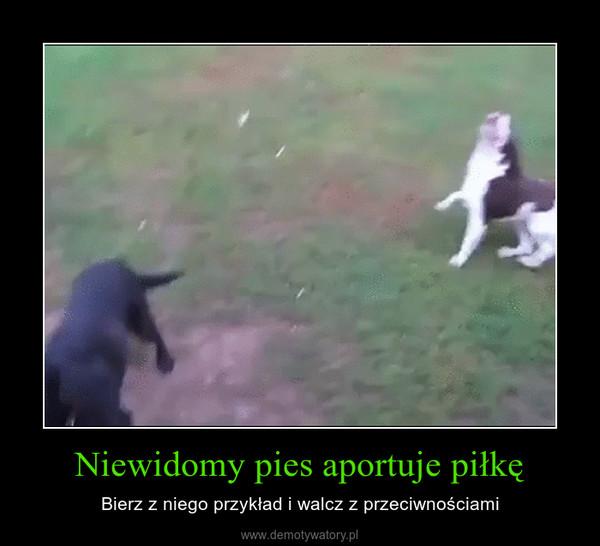 Niewidomy pies aportuje piłkę – Bierz z niego przykład i walcz z przeciwnościami