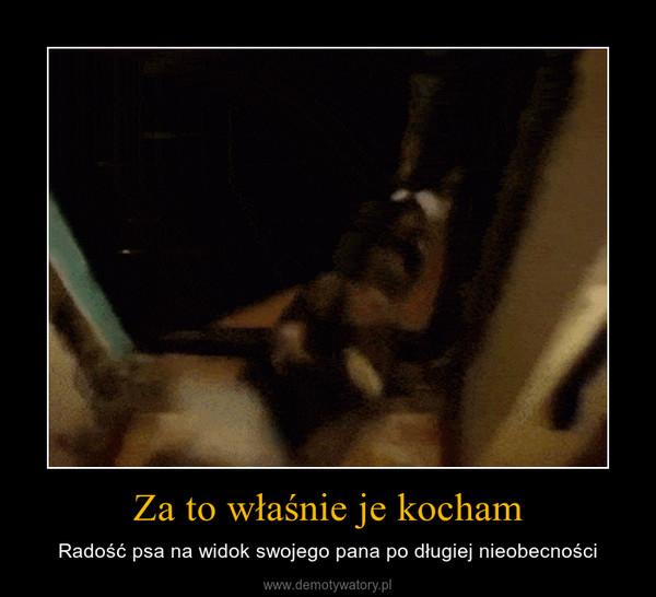 Za to właśnie je kocham – Radość psa na widok swojego pana po długiej nieobecności