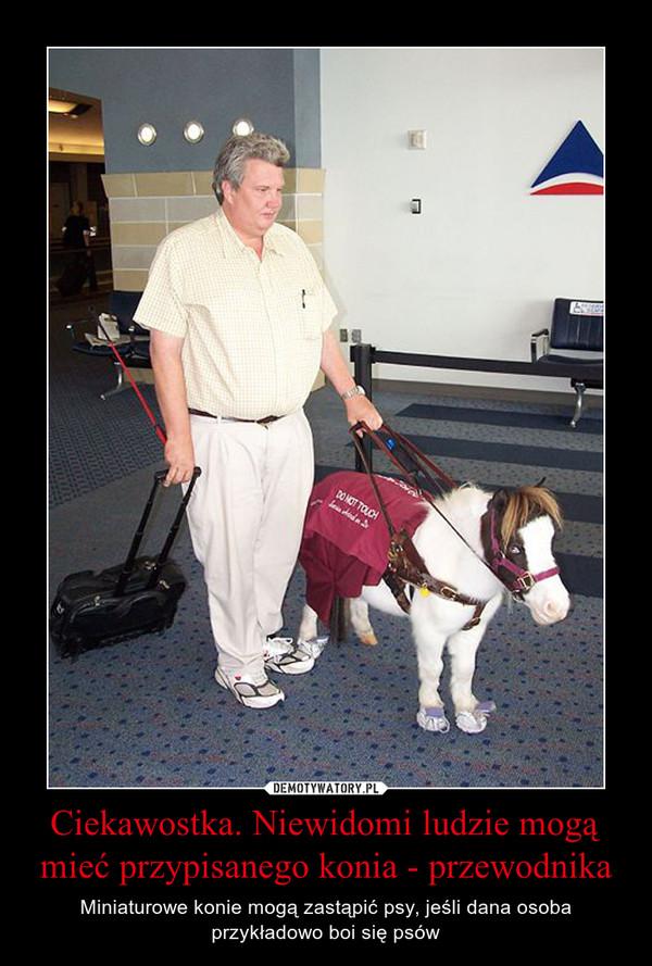 Ciekawostka. Niewidomi ludzie mogą mieć przypisanego konia - przewodnika – Miniaturowe konie mogą zastąpić psy, jeśli dana osoba przykładowo boi się psów