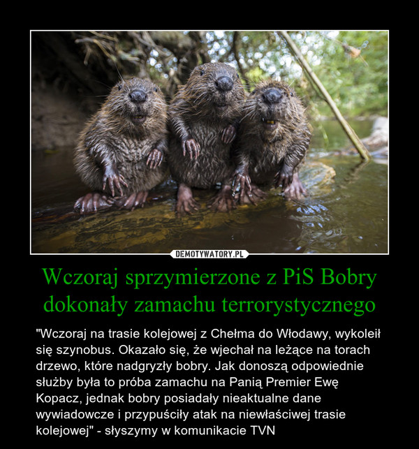 """Wczoraj sprzymierzone z PiS Bobry dokonały zamachu terrorystycznego – """"Wczoraj na trasie kolejowej z Chełma do Włodawy, wykoleił się szynobus. Okazało się, że wjechał na leżące na torach drzewo, które nadgryzły bobry. Jak donoszą odpowiednie służby była to próba zamachu na Panią Premier Ewę Kopacz, jednak bobry posiadały nieaktualne dane wywiadowcze i przypuściły atak na niewłaściwej trasie kolejowej"""" - słyszymy w komunikacie TVN"""