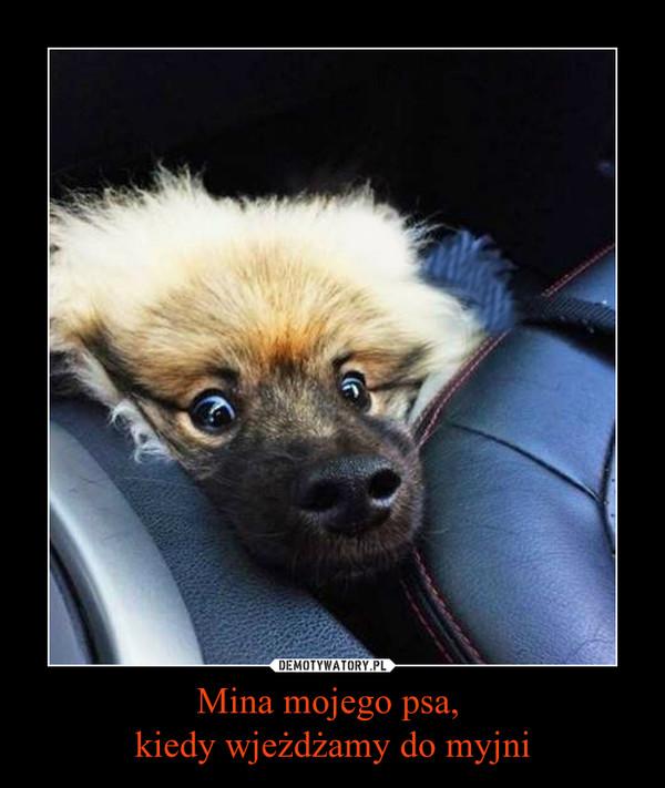 Mina mojego psa, kiedy wjeżdżamy do myjni –
