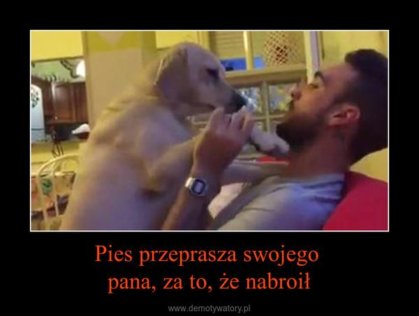 Pies przeprasza swojego pana, za to, że nabroił –