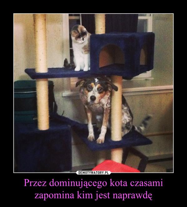 Przez dominującego kota czasami zapomina kim jest naprawdę –