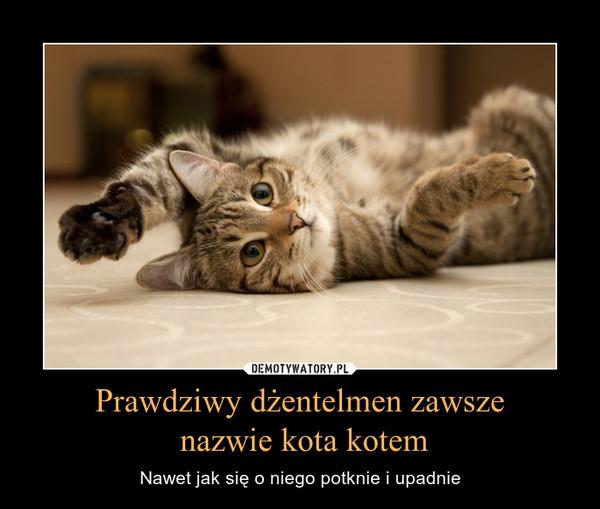 Prawdziwy dżentelmen zawsze nazwie kota kotem – Nawet jak się o niego potknie i upadnie