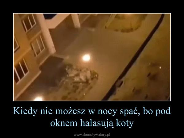 Kiedy nie możesz w nocy spać, bo pod oknem hałasują koty –