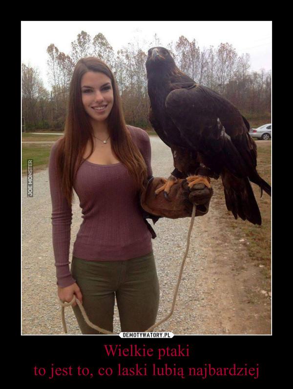 Wielkie ptaki to jest to, co laski lubią najbardziej