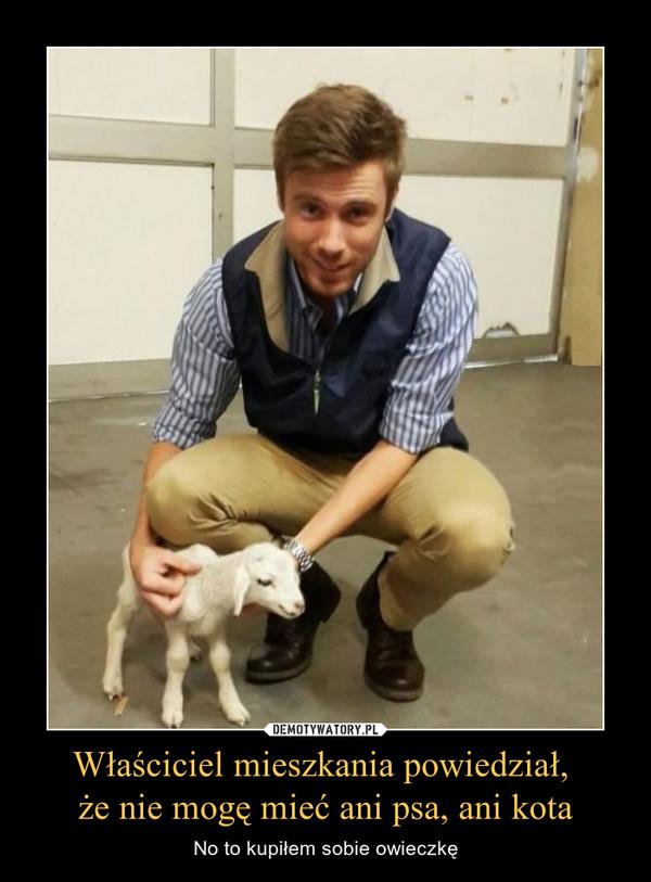 Właściciel mieszkania powiedział, że nie mogę mieć ani psa, ani kota – No to kupiłem sobie owieczkę