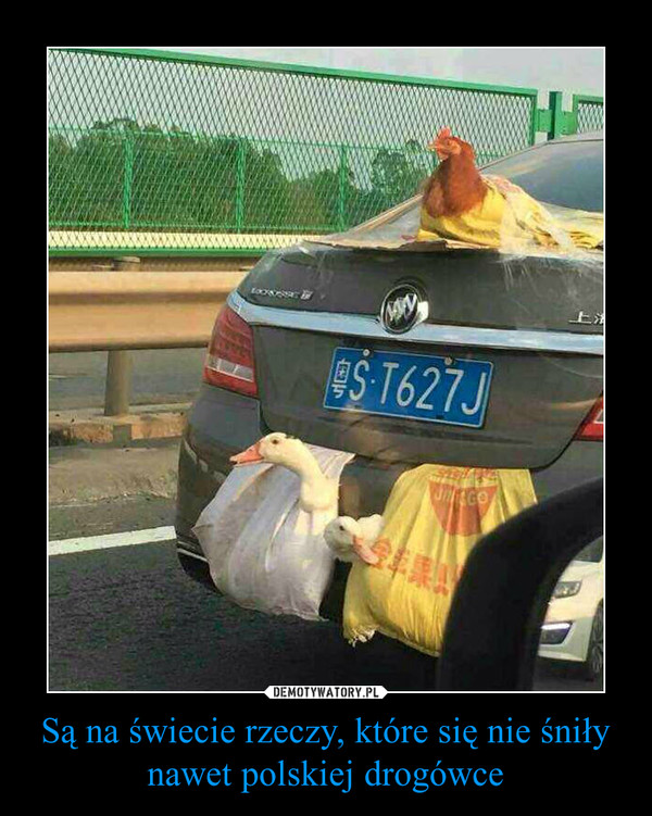 Są na świecie rzeczy, które się nie śniły nawet polskiej drogówce –