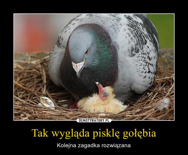 Tak wygląda pisklę gołębia – Kolejna zagadka rozwiązana