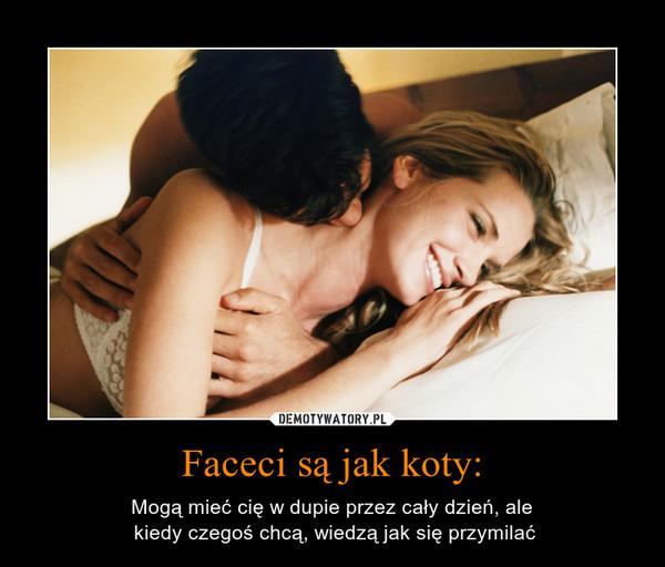 Faceci są jak koty: – Mogą mieć cię w dupie przez cały dzień, ale kiedy czegoś chcą, wiedzą jak się przymilać