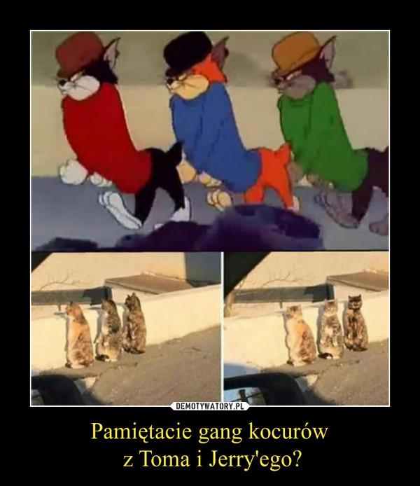 Pamiętacie gang kocurów z Toma i Jerry'ego? –